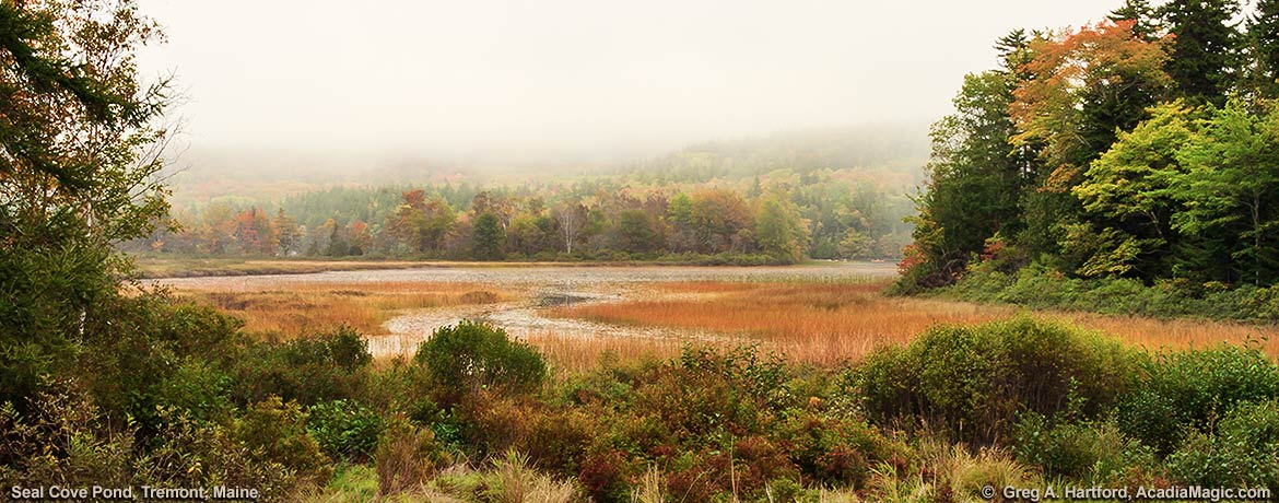 Seal Cove Pond on Mount Desert Island, Maine