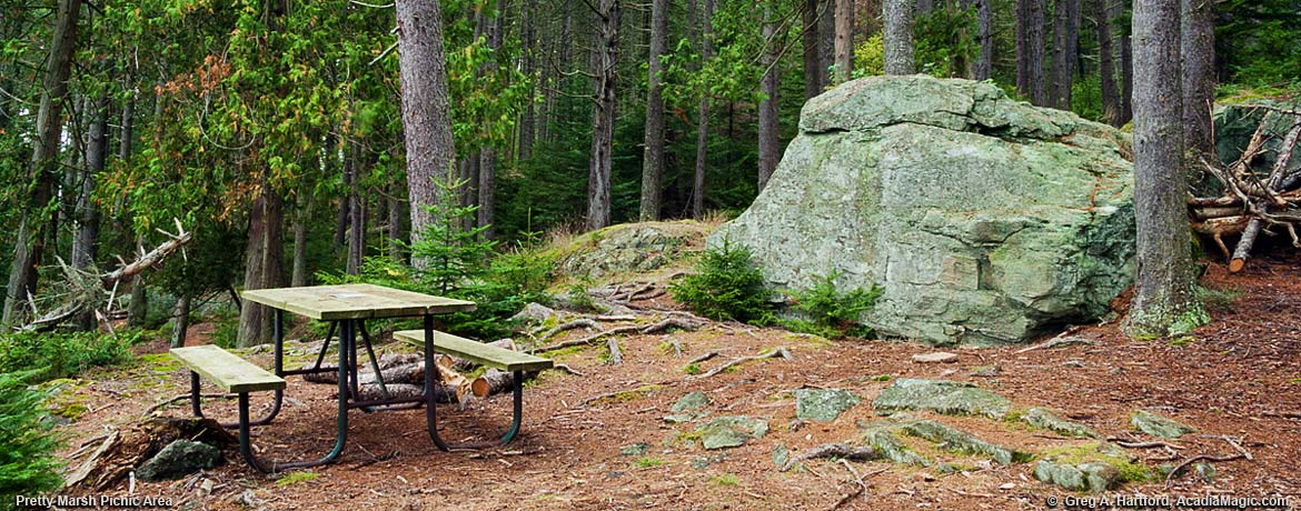 Acadia National Park Picnic Area at Pretty Marsh