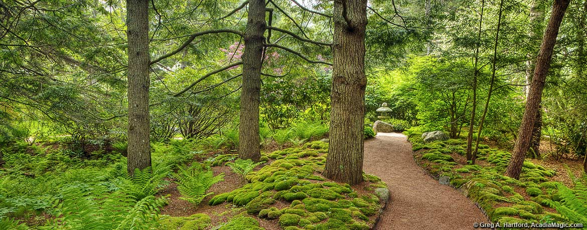Green moss and evergreen near walking path