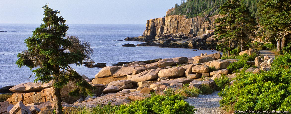 Ocean Path near Otter Cliff in Acadia