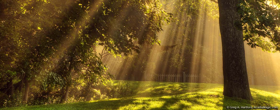 Sunburst of light rays through tree