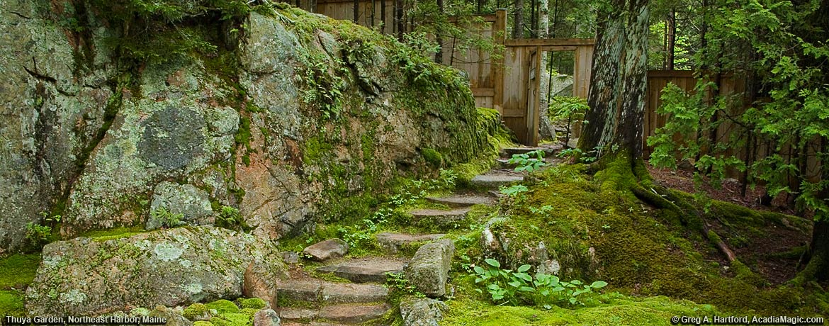 Stone steps leading to Eliot Mountain hiking trail in Acadia National Park