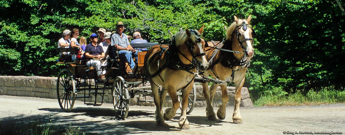 Wildwood Stables Carriage Ride