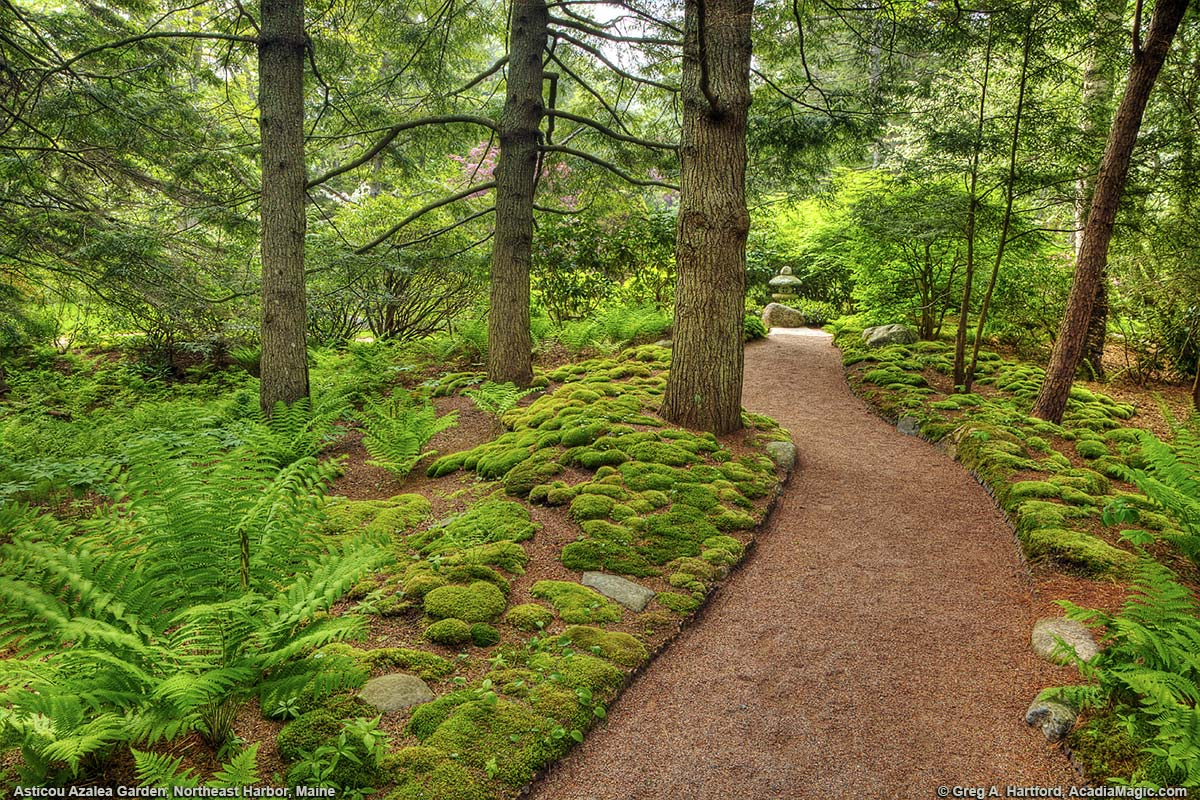 Green moss and evergreen trees next to walking path