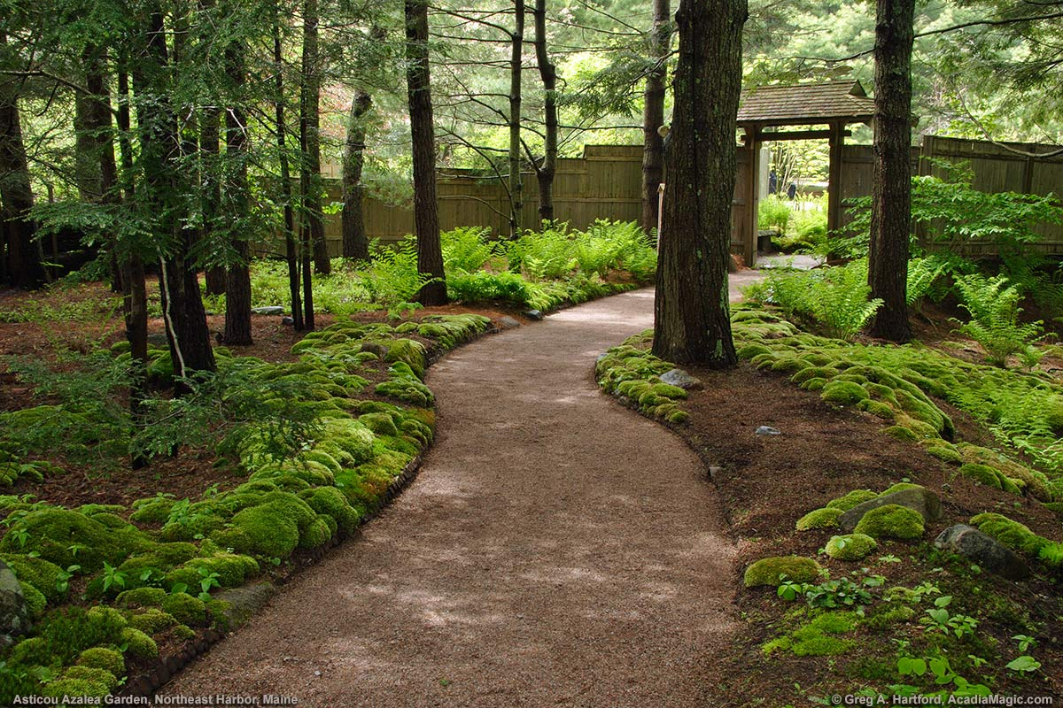 Walking Path through setting with green moss and ferns