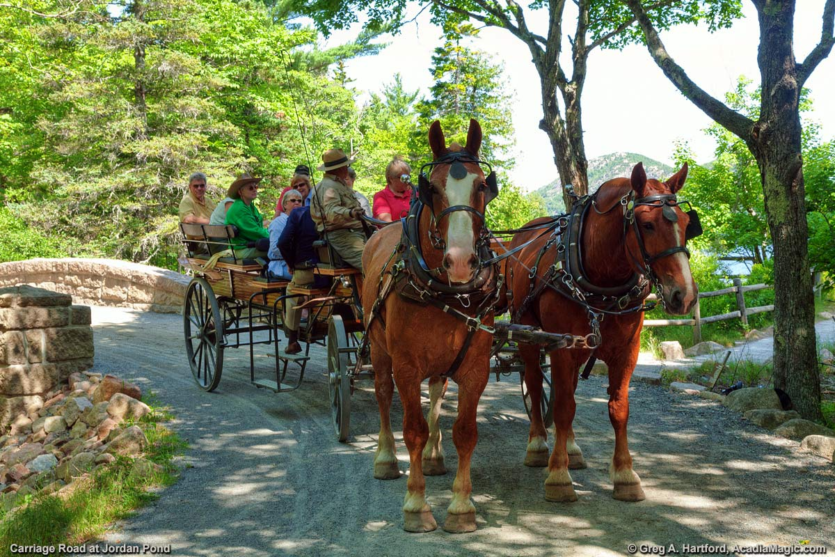 Horses and Carriage at the small bridge at Jordan Pond