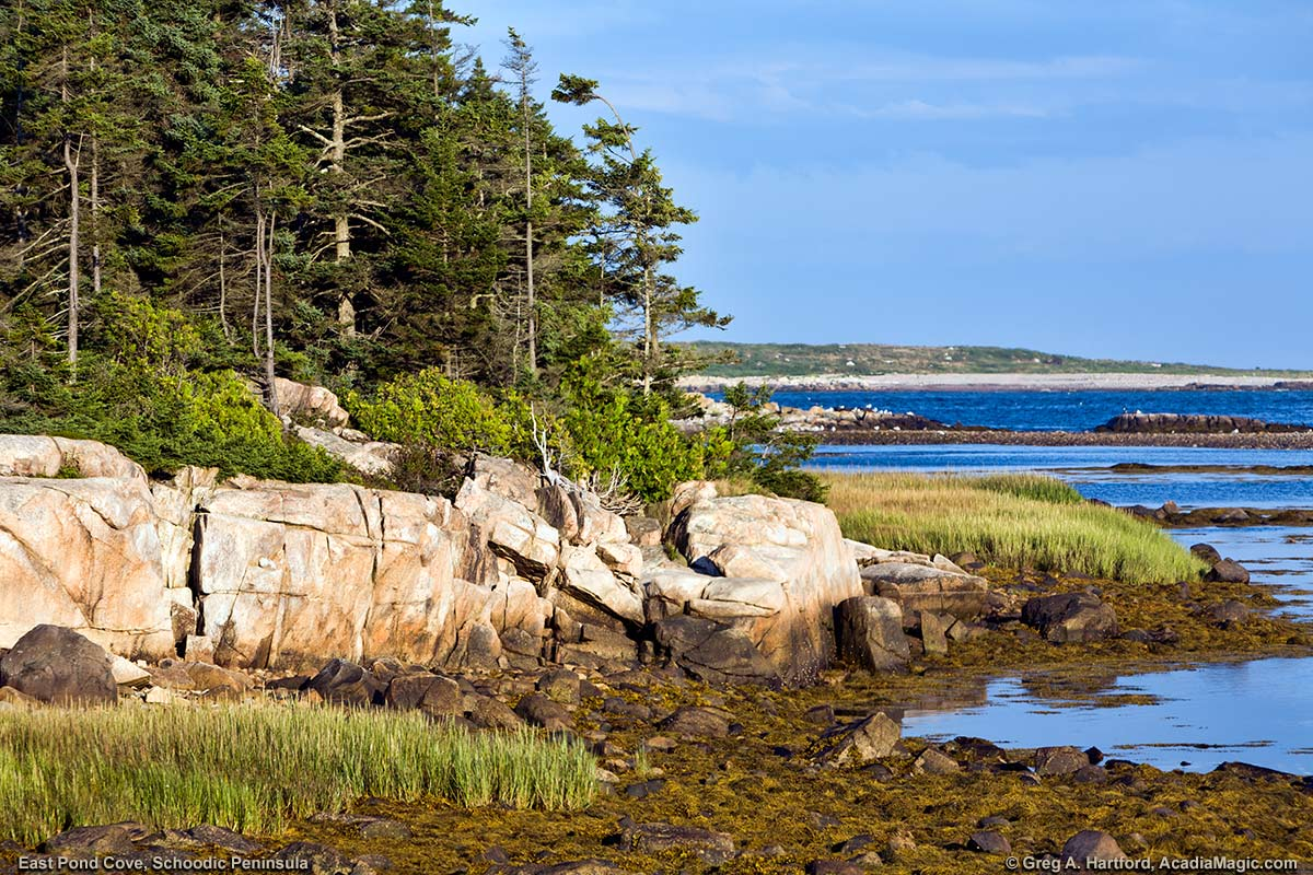 Rocky Shore with coastal vegetation at East Pond Cove in Acadia National Park, Maine