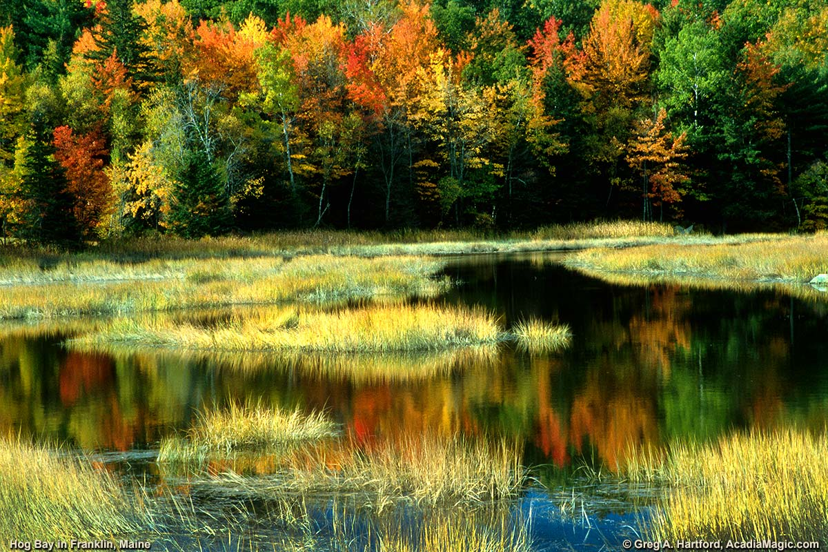 Autumn at the northern end of Hog Bay in Franklin, Maine