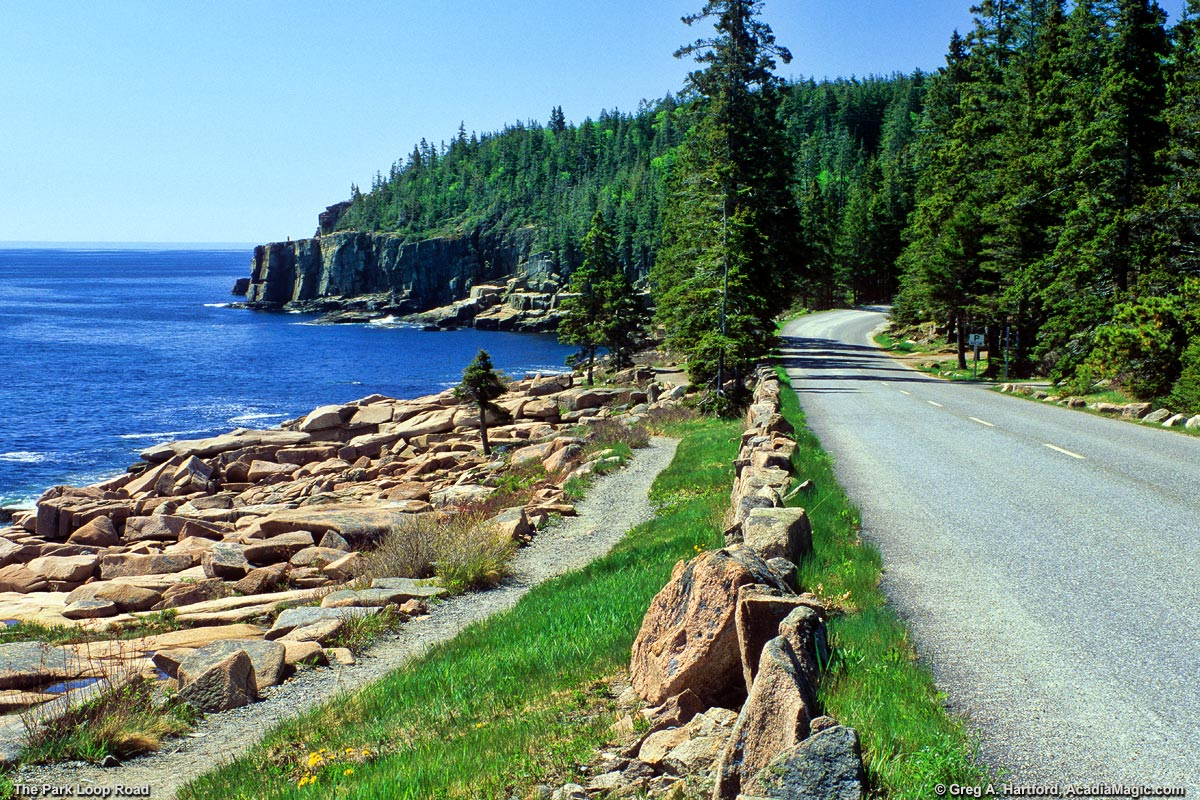 The Park Loop Road next to the Ocean Path in Acadia National Park