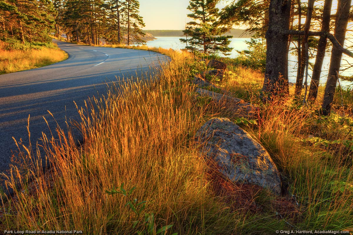 The Park Loop Road near Otter Cliff in Autumn in Acadia National Park