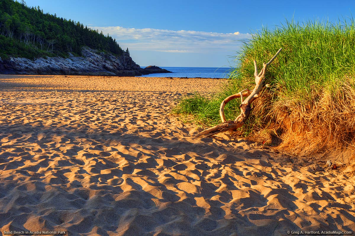 Driftwood Leaning Against Sand Dune At Beach In Bar Harbor