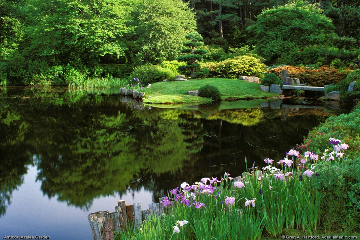 A view of Asticou Azalea Garden from Route 3 and the Asticou Inn
