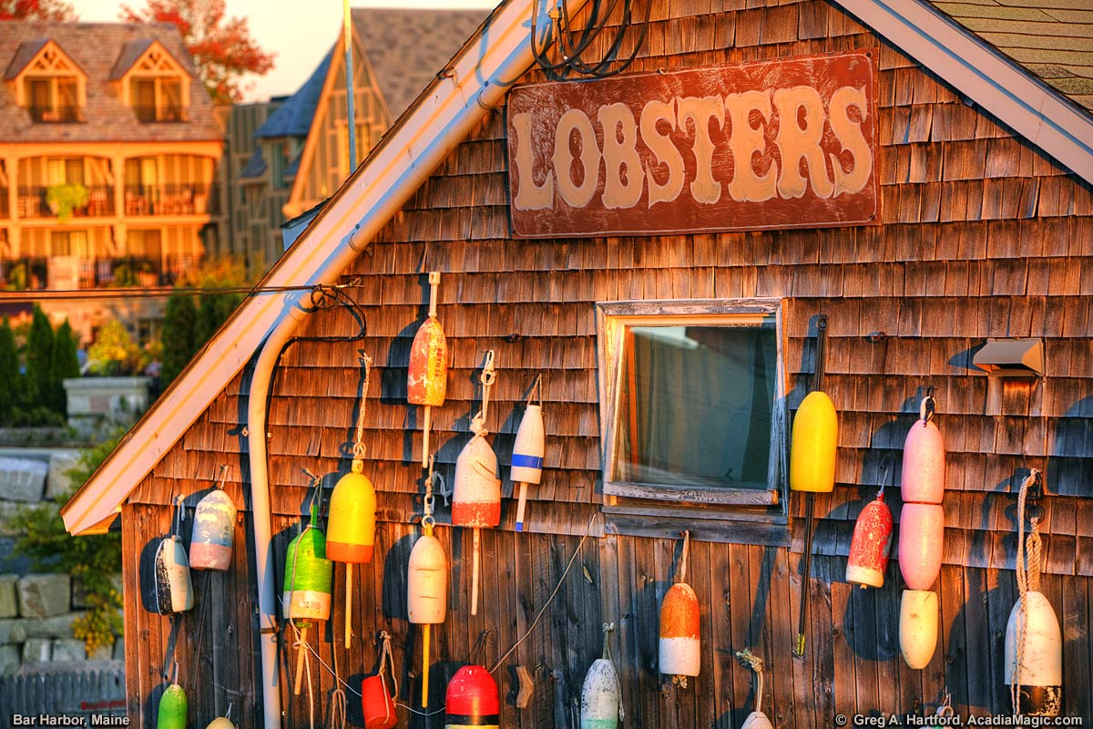 Maine lobster buoys and lobster sign in Bar Harbor