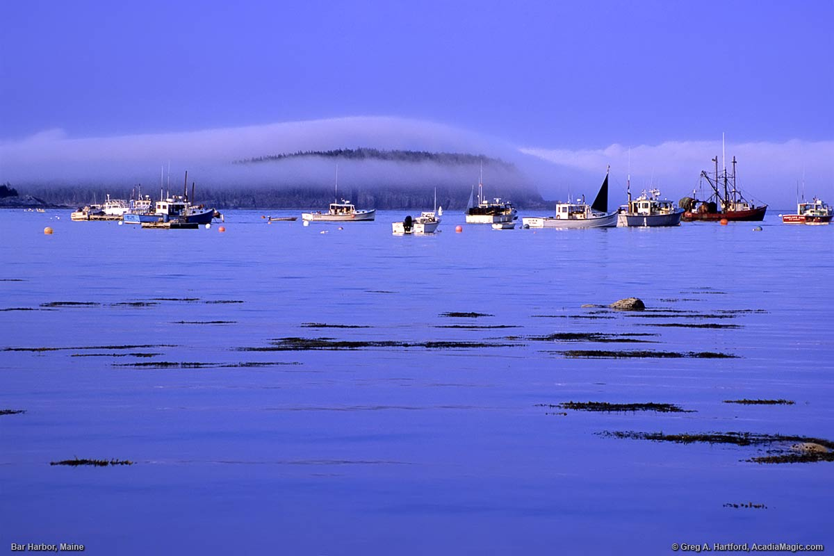 Harbor scene with lobster boats and fog over Bar Island viewed from Bar Harbor shore