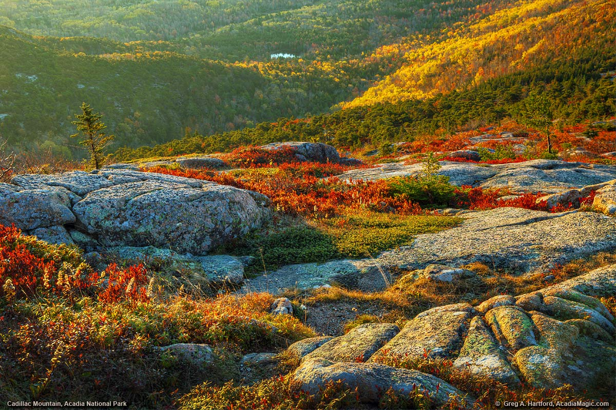 A tapestry of autumn colors on Cadillac Mountain