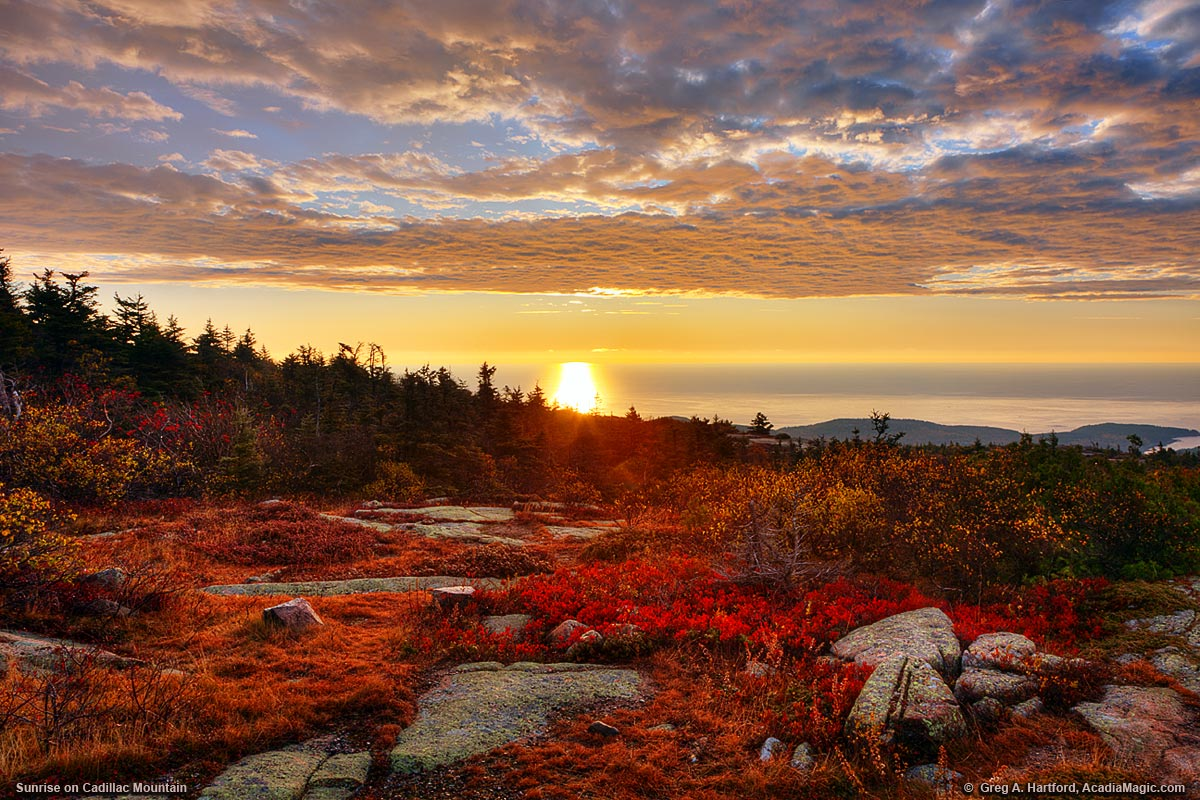 Autumn sunrise on Cadillac Mountain with red blueberry plant leaves