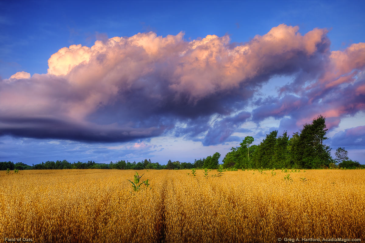 Field of oats and Clouds over a Maine Field