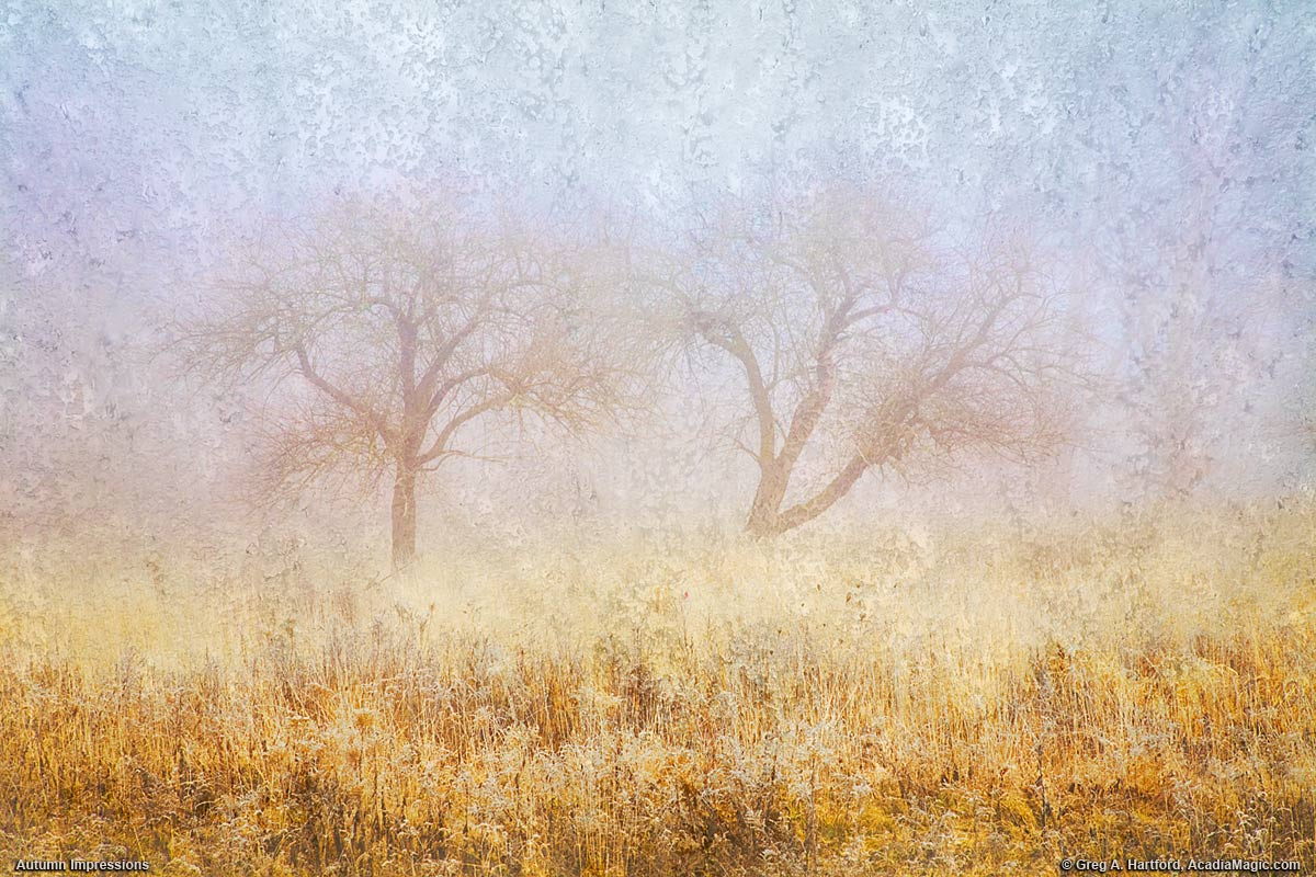 Autumn impressions of old apple trees on foggy morning