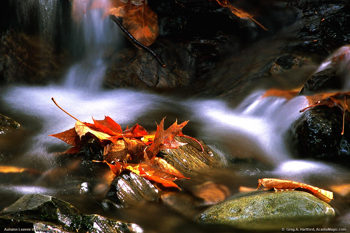 Autumn leaves rest on rocks in a fall stream