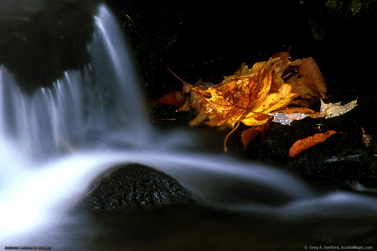 Autumn leaves rest on some rocks next to this fall stream near Acadia National Park in Maine.