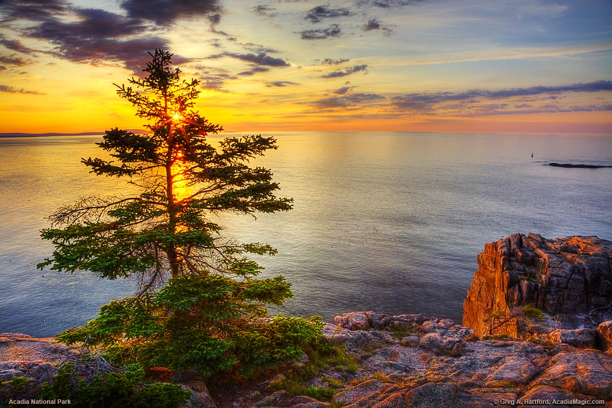 Silhouette of tree during sunrise at Otter Cliff in Acadia National Park