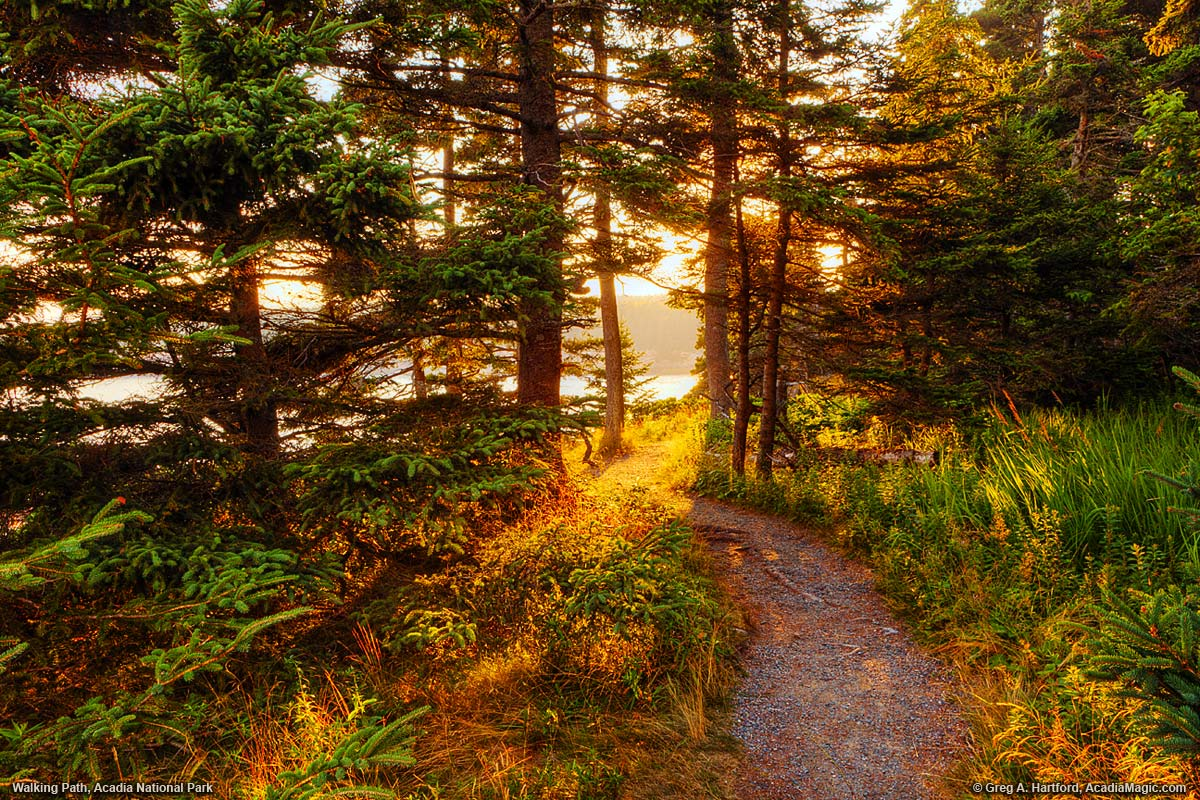A walking path through the trees opens to the ocean, bathed in golden light.