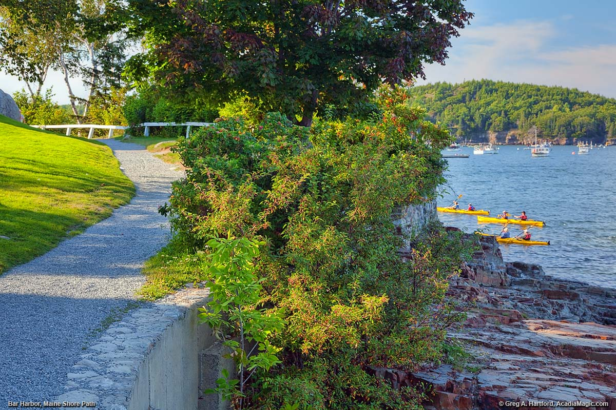 Kayakers paddle by the Shore Path in Bar Harbor