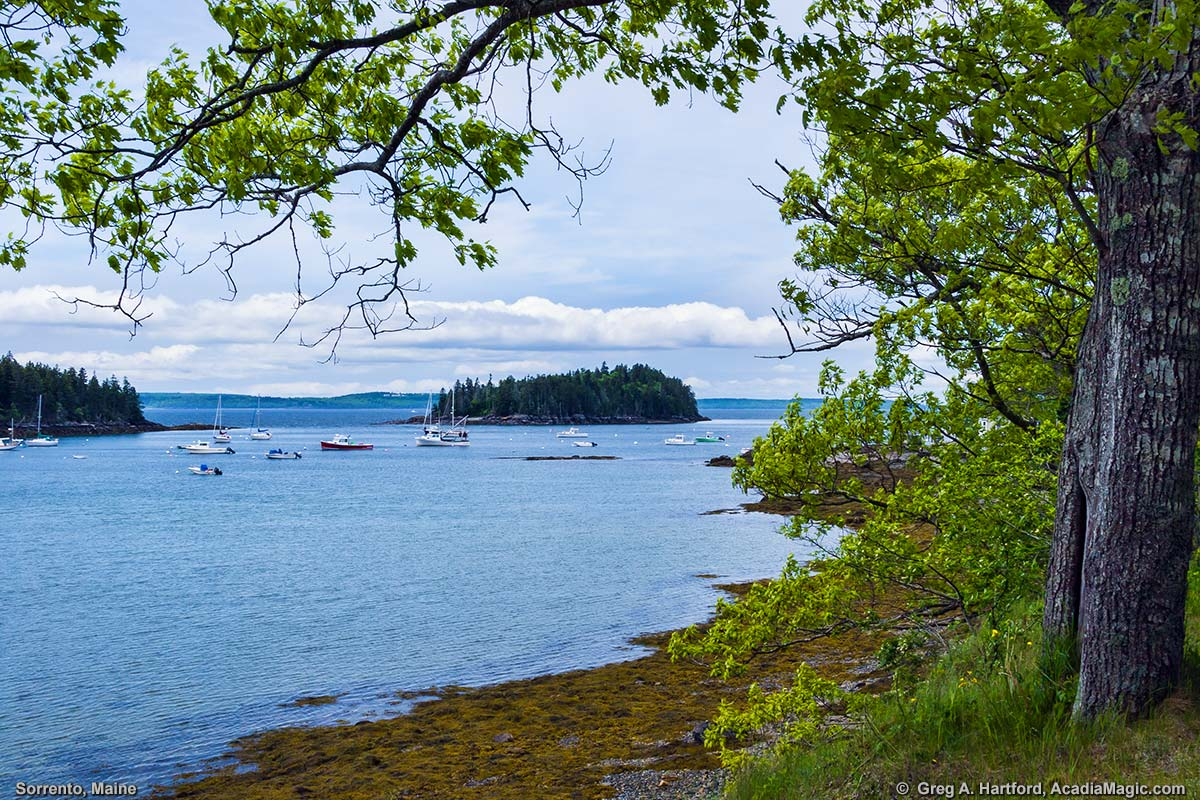 Dram Island as seen from the shore of Sorrento, Maine