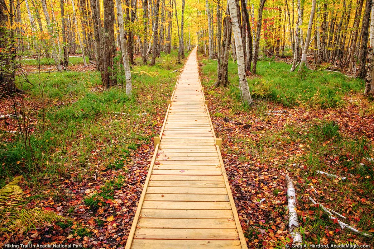 Boardwalk on Acadia National Park hiking trail