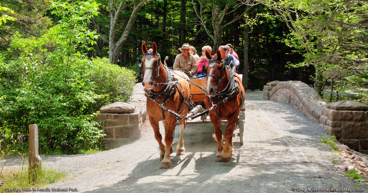 Wildwood Stables Acadia Carriage Rides
