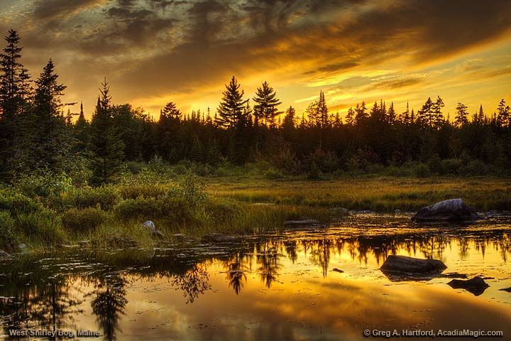 West Shirley Bog at Sunset