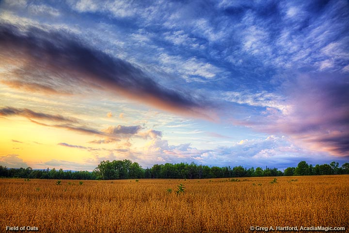 Winter Wheat and Clouds in Maine Highlands