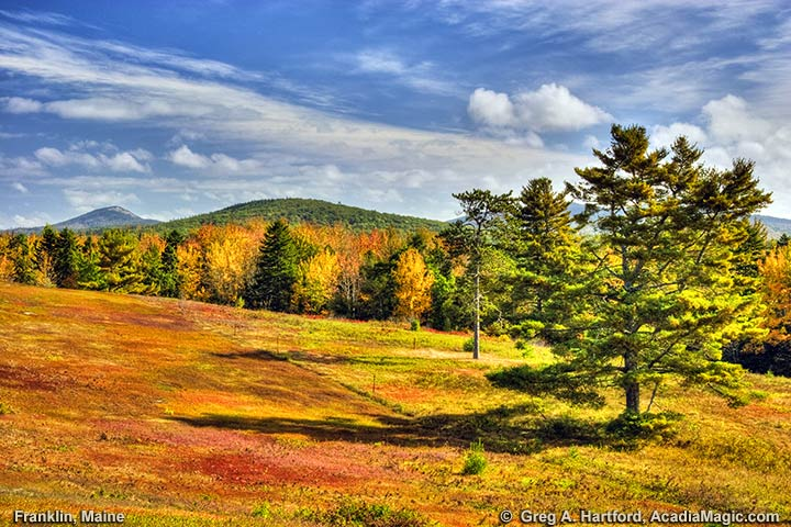 Blueberry fields in Franklin, Maine