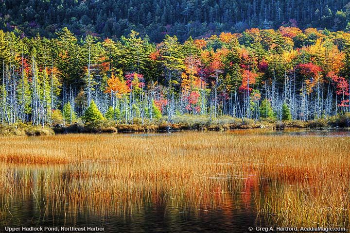 Autumn view of Upper Hadlock Pond in Acadia