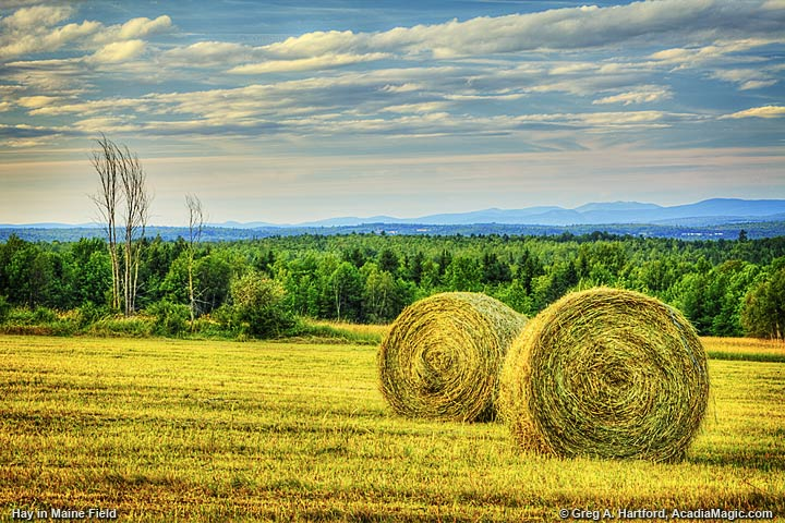 Round Bays of Hay in Maine Field