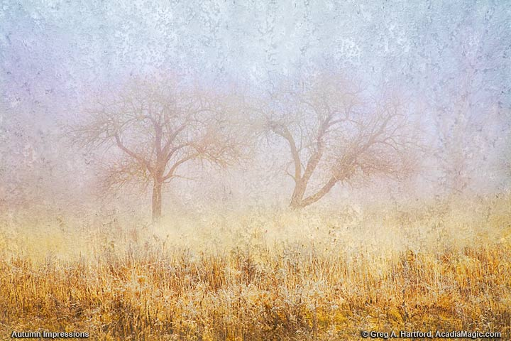 Impressionistic creation showing old apple trees in autumn