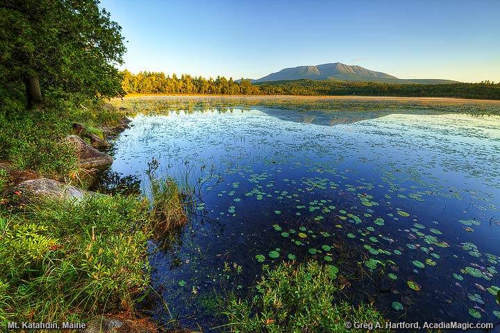 Lily Pads at Compass Pond with Mount Katahdin