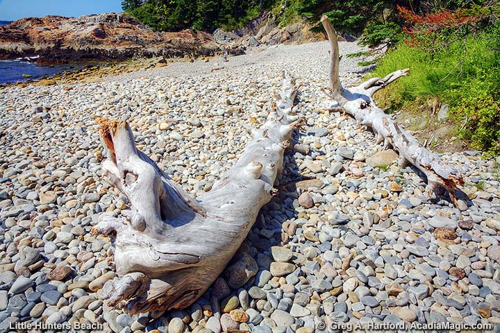 Driftwood on Little Hunters Beach