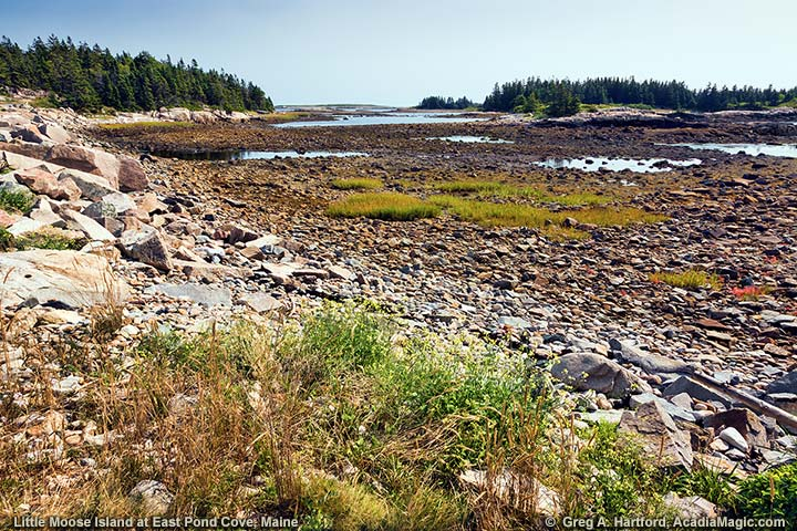 Little Moose Island at East Pond Cove