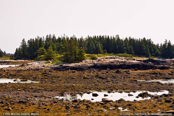 Little Moose Island at Low Tide