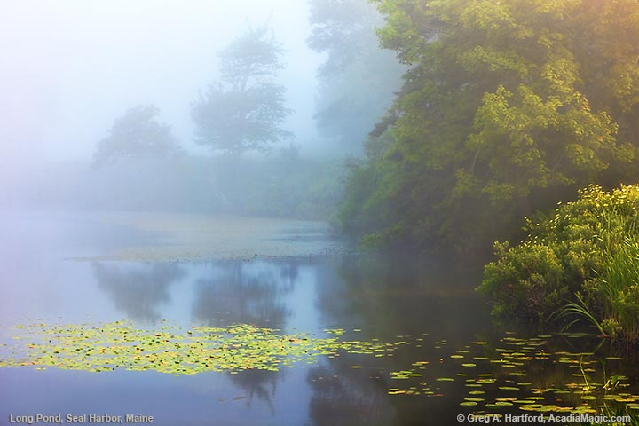 Foggy morning at Little Long Pond