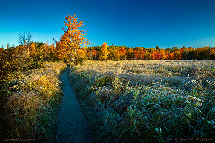 Hiking Trail at Great Meadows in Acadia National Park, Bar Harbor, Maine during Autumn