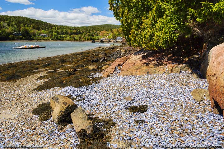Mussel shells on the shore in Northeast Harbor, Maine