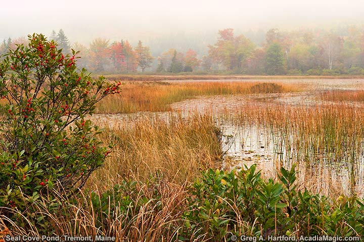 Autumn at Seal Pond Cove in Tremont, Maine