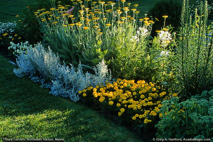 A bed of beautiful flowers in Thuya Garden, Maine