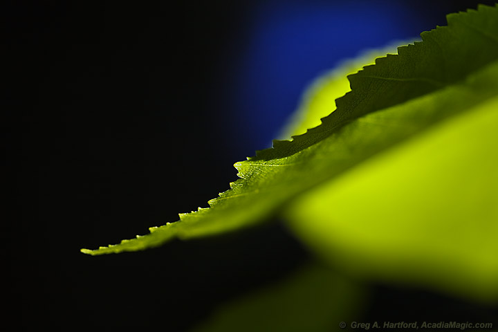 Macro view of plant leaf in morning light