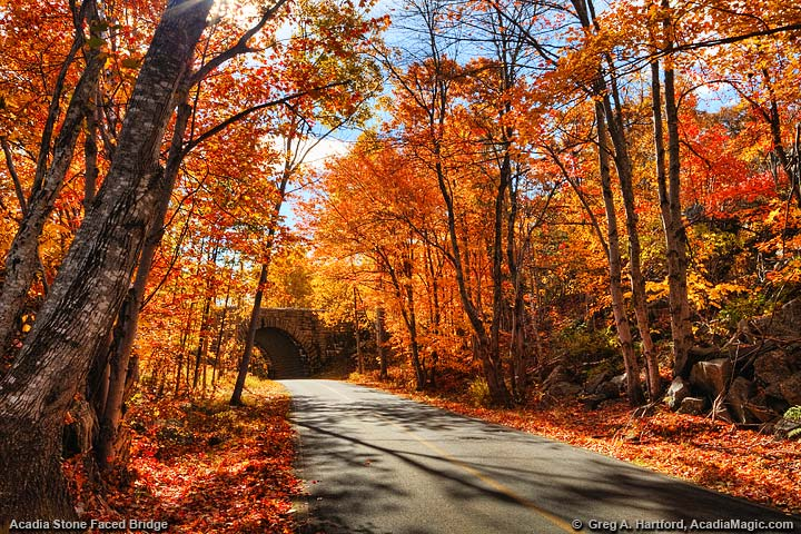 Colorful autumn trees next to Bar Harbor road
