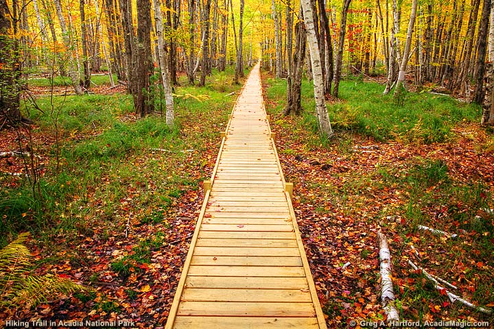 Hiking Trail Boardwalk in Bar Harbor and Acadia