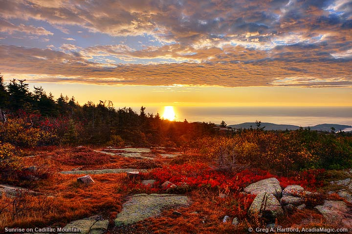 Autumn on Cadillac Mountain with red wild blueberry plant leaves