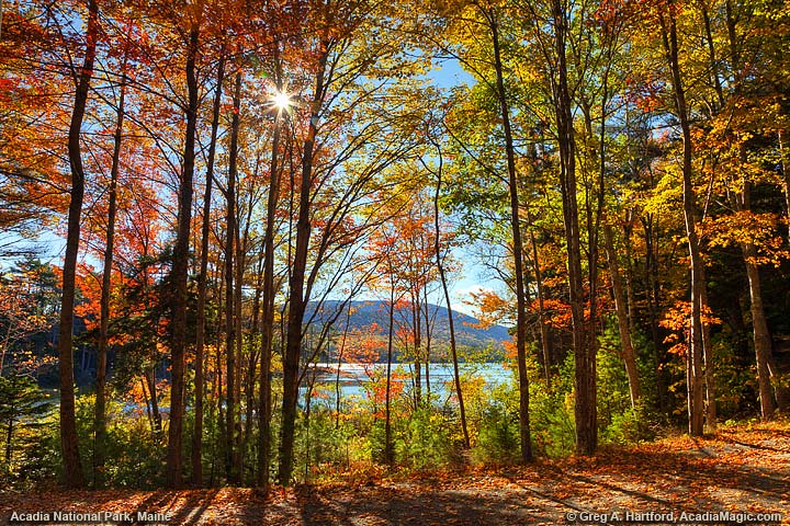 Autumn sunbursts through the trees at Eagle Lake
